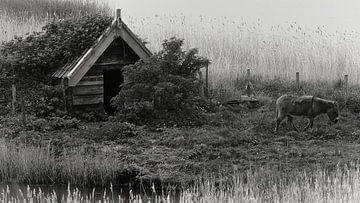 Ezeltje in de Zeeuwse polder von Herman Moor