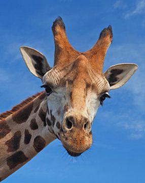 Nahaufnahme einer Giraffe von Eye to Eye Xperience By Mris & Fred
