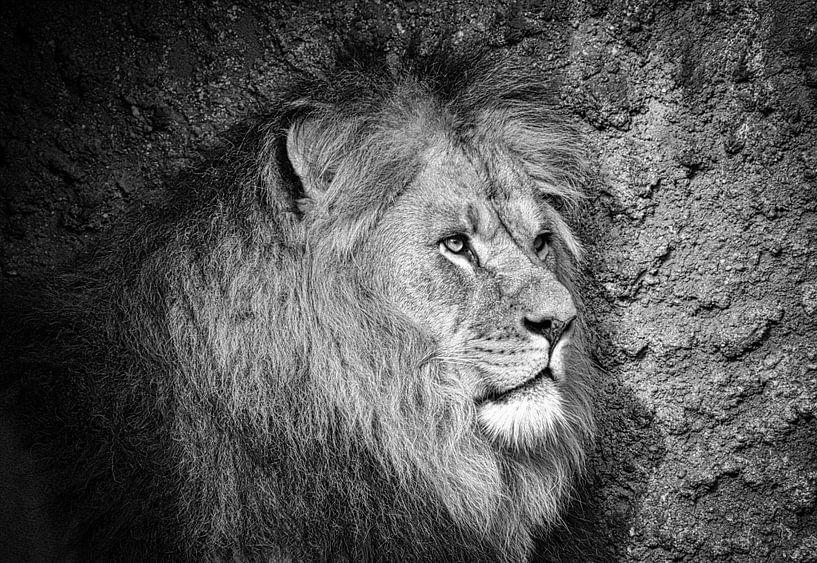 Leeuw profiel in zwart wit van Peter Bolman