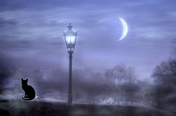 De kat in het maanlicht van Vera Laake