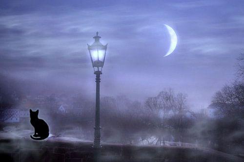 De kat in het maanlicht