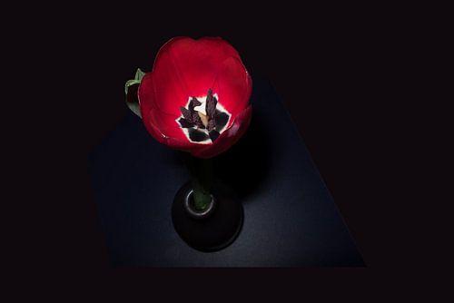 Tulp op tafel