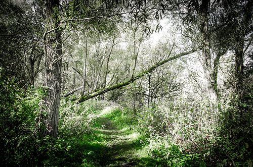 Bospad in de Biesbosch  van Ricardo Bouman | Fotografie