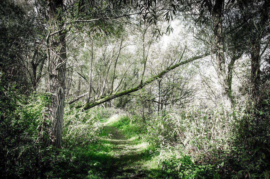 Omgevallen boom - Biesbosch