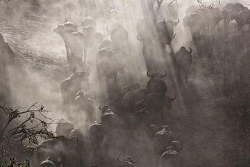 Büffel in Staubwolke von Angelika Stern