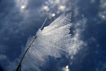 Bevroren sneeuw van Eline Koenen