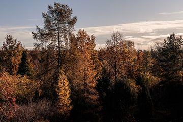 Herbstlaub im Morgenlicht von Severin Frank Fotografie
