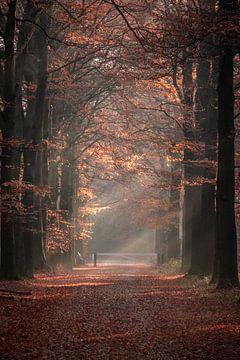 Mistig bos van Jayzon Photo