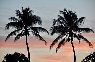 Zonsondergang achter de palmen van Myrthe Visser-Wind
