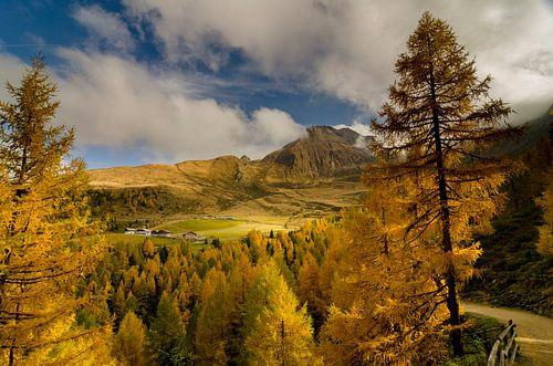 Goudgele lariksen brengen herfstkleuren in de bergen boven Meran.