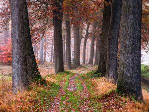Gemütlicher Weg von Tvurk Photography
