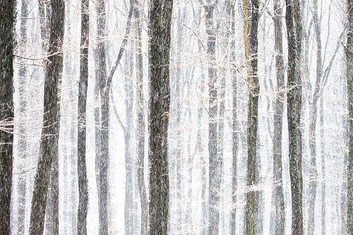 bomen in winterse omstandigheden