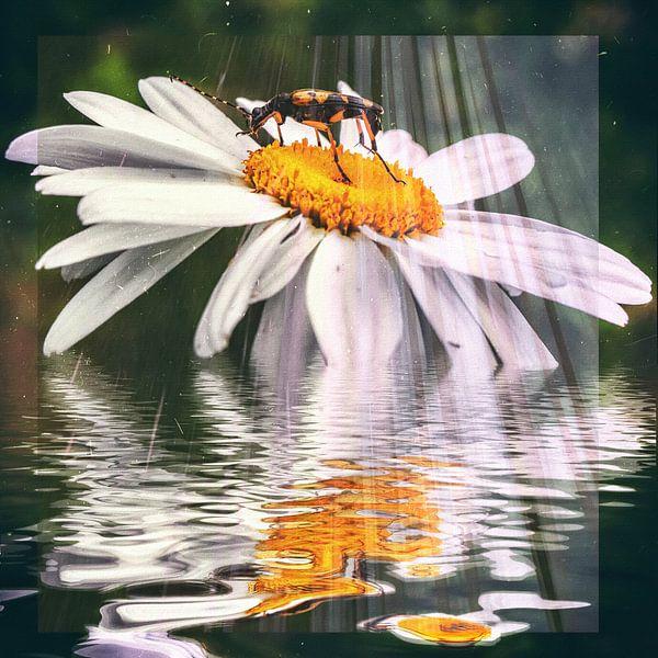 Wellness - Käfer im Sonnenbad von Christine Nöhmeier