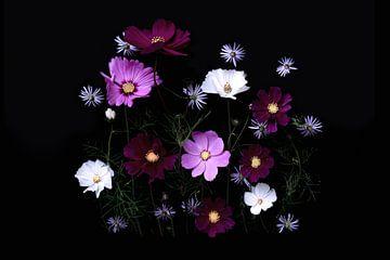 Blumenporträt (Cosmea) von Ineke VJ