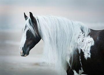 Bont paard op het strand van Kim van Beveren