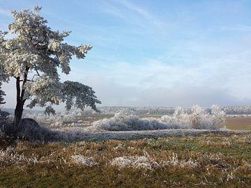 Winterwunderwelt von Andrea Meister