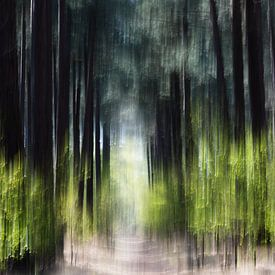 Kalmthoutse Heide von Ingrid Van Damme fotografie