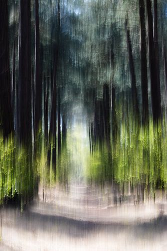 Kalmthoutse Heide van Ingrid Van Damme fotografie