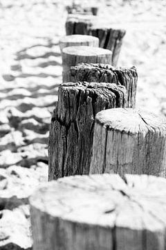 Close-up van paalhoofden aan de  kust | Zeeland, Nederland | Zwart-wit foto | Landschapsfotografie van Diana van Neck Photography