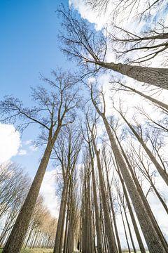 boomtoppen met wolken von Marcel Derweduwen