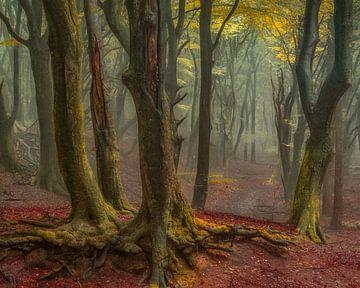 Het Bos van