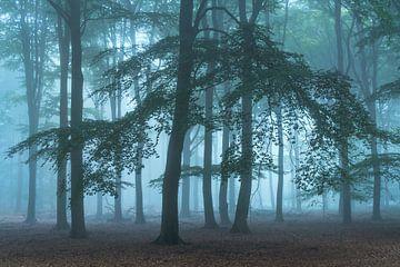 Mysteriöse Atmosphäre an einem nebligen Morgen von Dennis Mulder