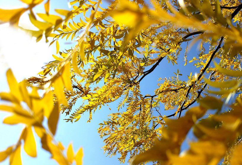 Herbst-Baum von Markus Jerko