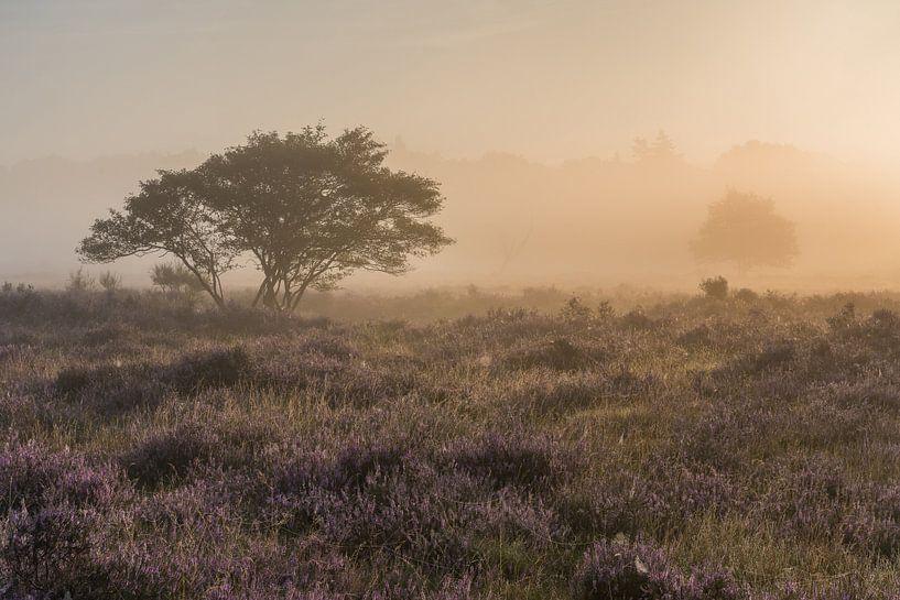 Brouillard au lever du soleil sur le Westerheide 3 sur Jeroen de Jongh