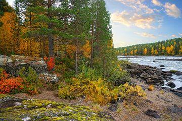 Schwedens Wildnis - Schwedisch Lappland von Thomas Zacharias