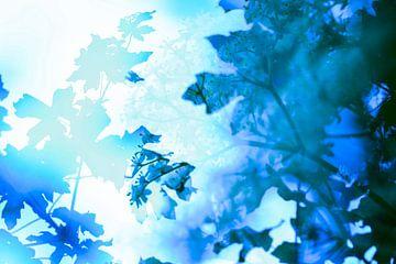 Blauwe bladeren von Nanda Bussers
