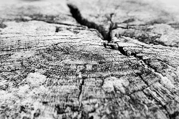 Zeeland Pfahlkopf vergrößert | Schwarz-Weiß-Foto von Diana van Neck Photography