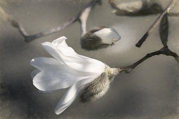 Unfolding Beauty sur Lars van de Goor