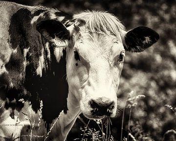 De Koe. von Harrie Eickenboom