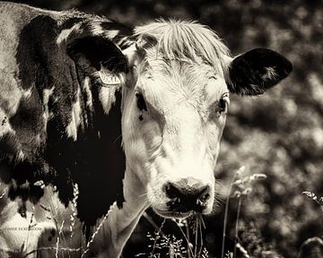 De Koe. van Harrie Eickenboom