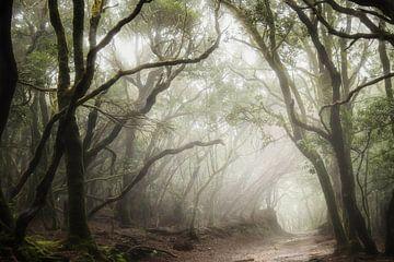 La forêt tropicale d'Anaga sur Roelie Steinmann