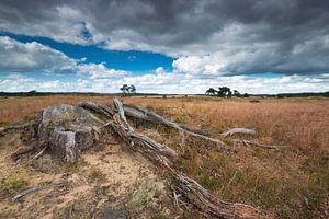 Heathland with tree trunk on the foreground with a dark sky. Een dode boomstronk in het park de Hoge