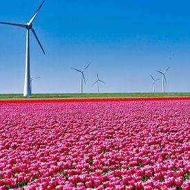 Tulpenveld van YesItsRobin