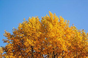 Herfstboom van Evelyne Renske
