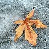 2 seasons van Lory van der Neut thumbnail