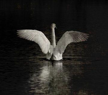 Bird of paradise von Jenny de Groot