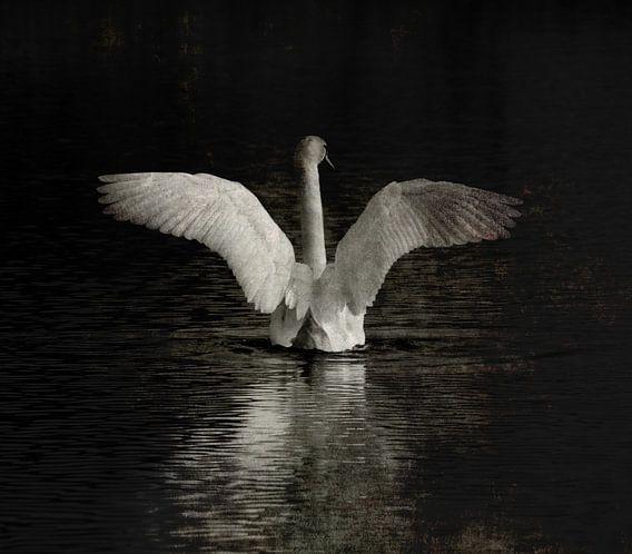 Bird of paradise van Jenny de Groot