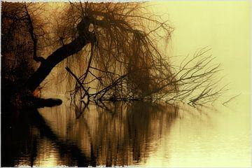 brown eyetree van Bernd Hoyen
