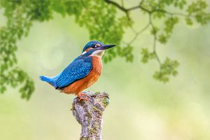 Kingfisher van Thomas Herzog