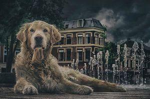 Straathond in Leeuwarden.