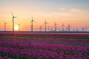 Tulips & Turbines