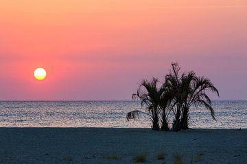 Palmen am Strand des Mittelmeers im Sonnenuntergang von Frank Herrmann