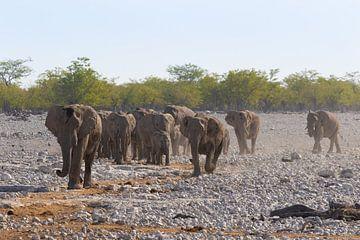 Olifantenkudde in het Etosha National Park van GoWildGoNaturepictures
