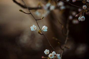 Blüte von Elise Debije