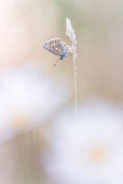 Verträumter Schmetterling von Bob Daalder