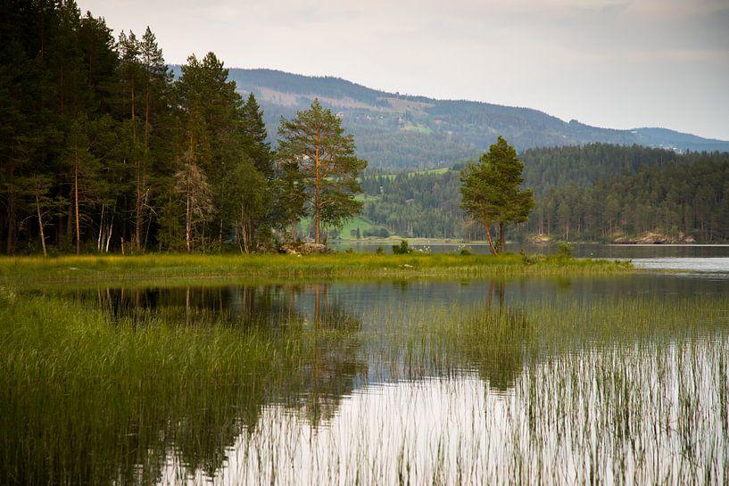 Bos en  aan de rand van het meer van Karijn   Fine art Natuur en Reis Fotografie